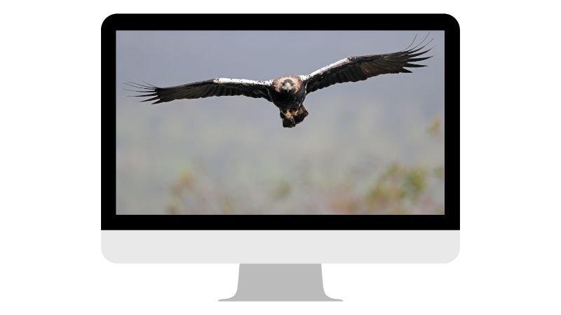 fotografia-fauna-salvaje-liebana-3