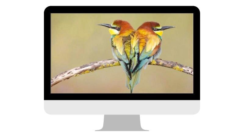 webinar-fotografia-hides-benito-1